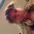 Profilbild von Melus